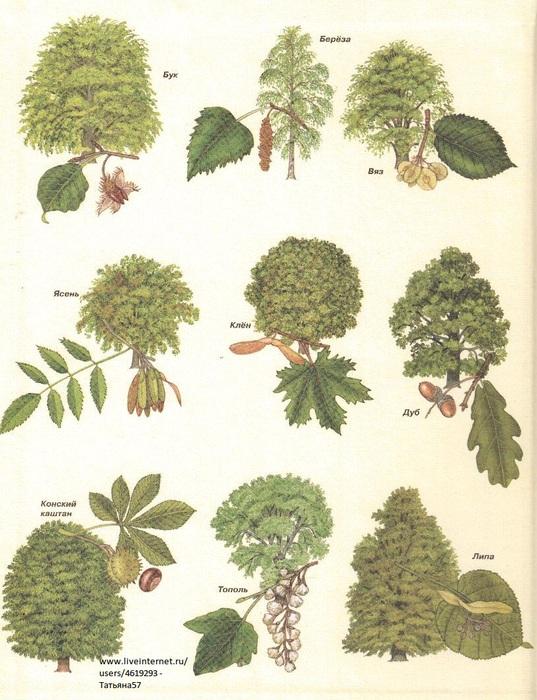 Картинки деревья осенью для доу